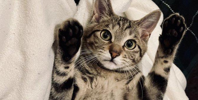 猫が『夢』に出てくるときの意味3つ!考えられる理由や心理状態とは?