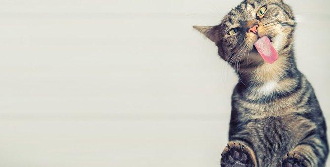 猫は練乳を食べても大丈夫?食べてしまったときの対処法など