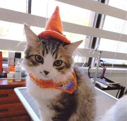 猫とハロウィンを楽しもう!かわいい仮装したねこ達を大特集