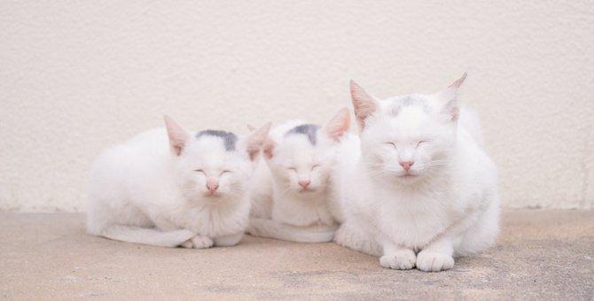 猫の数え方は「匹 or 頭」?犬と同じ?年齢の数え方も紹介
