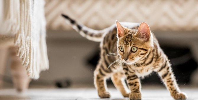 猫の『トラウマ体験』に繋がる飼い主のNG行動5つ