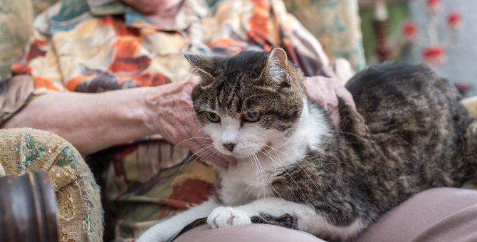 長寿な猫ギネス世界記録に登録された年齢とは