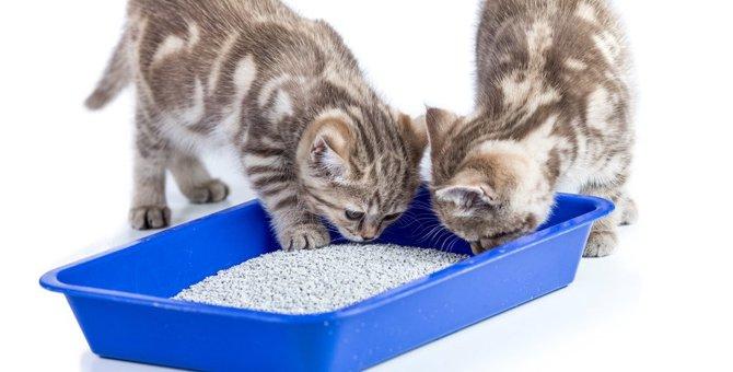 amazonの猫トイレおすすめ7選