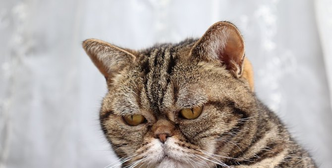 猫が不機嫌なときに触るとどうなる?考えられる対応パターン5つ