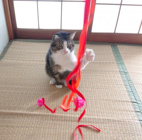 愛猫に手作り猫じゃらしをプレゼント!作り方をご紹介します