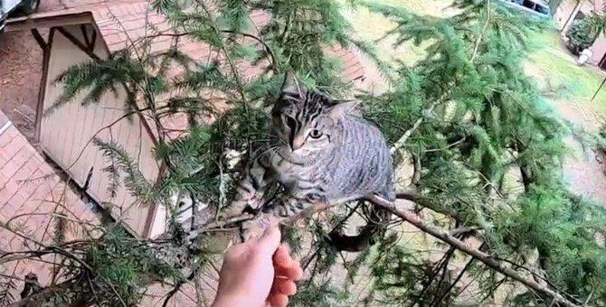 救助に烈火のごとく怒る猫のルビー。もしやありがた迷惑だった?!