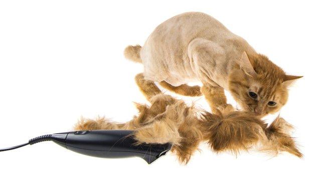 猫を丸刈りにしてもいいの?危険性や実際のやり方を調べてみた
