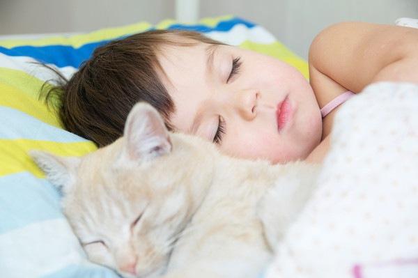 猫が毛をむしる原因や対策法