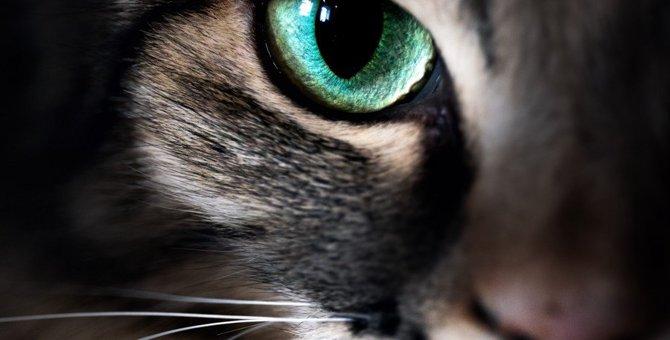 猫の視力が悪くなったら表れるサイン5つ!こんな小さな兆候でも見極めるのが大切