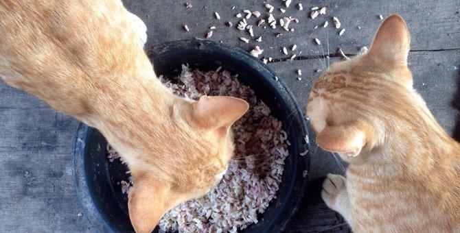 猫にお米は与えない方がいい理由