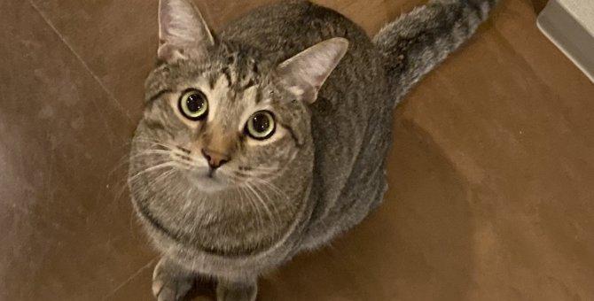 猫の好きな『人の声』のトーンとは?懐かれる声の特徴3つ