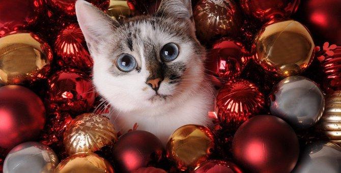 猫好き女子に贈ろう!猫モチーフの可愛いクリスマスプレゼント!