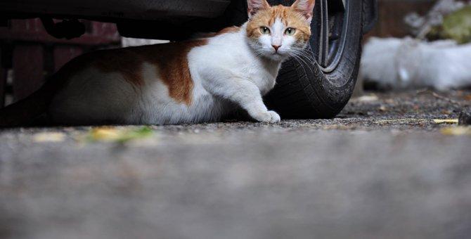 猫がエンジンルームに入る理由とその対処法
