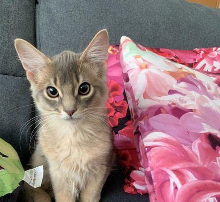 猫は飼い主のことをどんな存在だと思ってる?