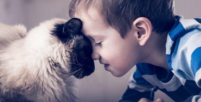 猫の鼻が『濡れていない』ときに気を付けるべき3つのこと