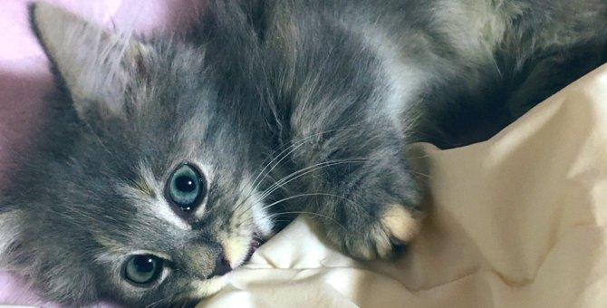 くっ!眩しい!子猫さんの『寝たフリ』が反則級の可愛さ♡