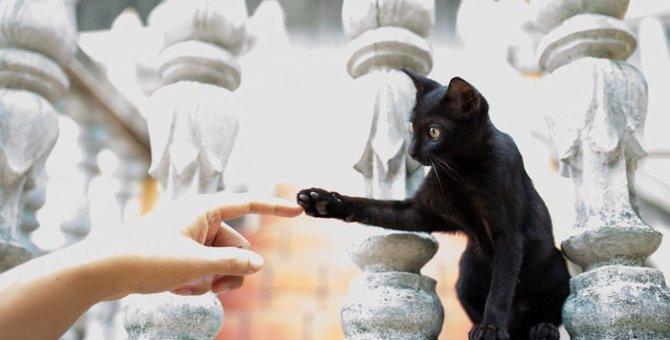 【世界にゃん事情】タイ・バンコクの猫たち