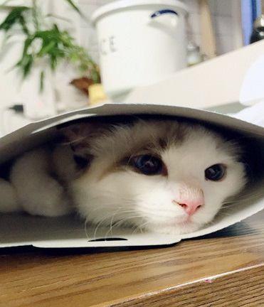 暑い地域と寒い地域どちらに住む猫の方が長生きする?