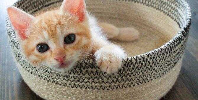 猫は何歳から大人になる?子猫のうちに必要な事