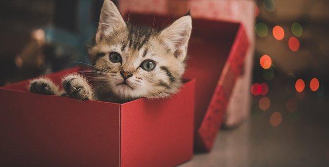 猫の飼い主さんにあげてはいけないNGプレゼント5つ