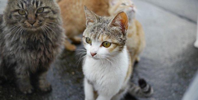 猫が集まる「集会」何をしているの?5つの理由