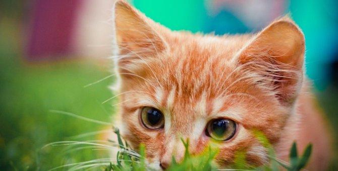 猫の年齢の見分け方や判断する方法