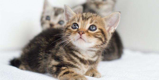 猫が見上げる時の気持ち8つ!かわいい画像も紹介