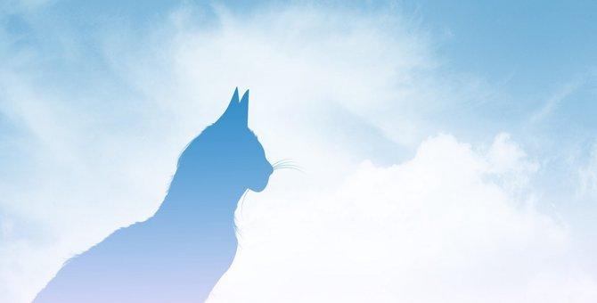 亡くなった猫が飼い主に『心から願うこと』3つ