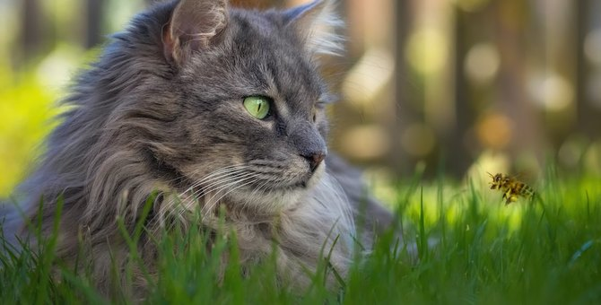 これって虫刺され?猫が虫に刺された時の特徴と種類、対処法まで