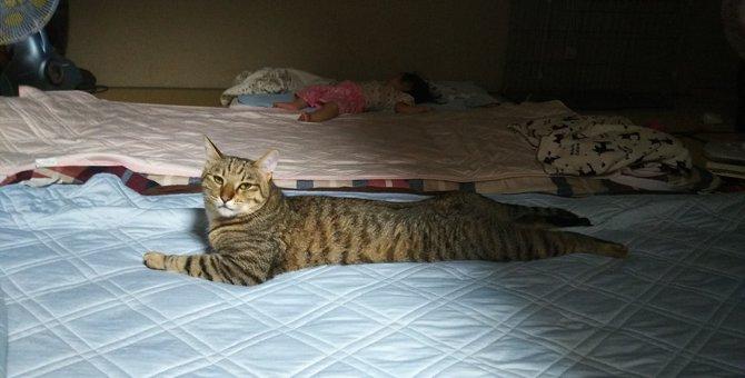 猫の1歳は人間でいうと17歳!適正体重や性格の特徴