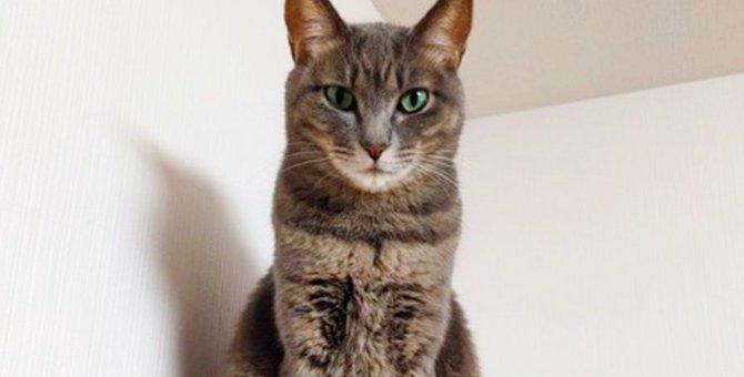 ペットロスで失意の底に…保護猫に救われた家族の物語