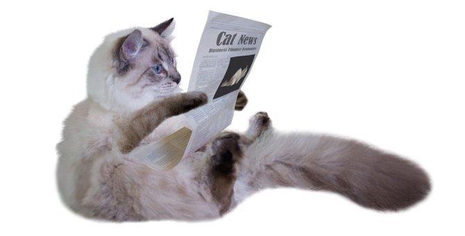 ねこ新聞が創刊200号を超えなお愛される理由