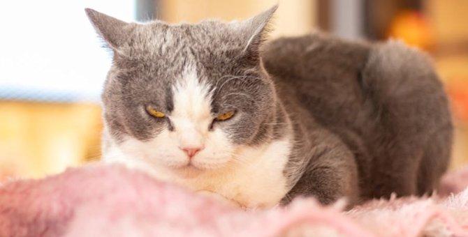 猫に悪影響!飼い主の日常的な危険行動4つ