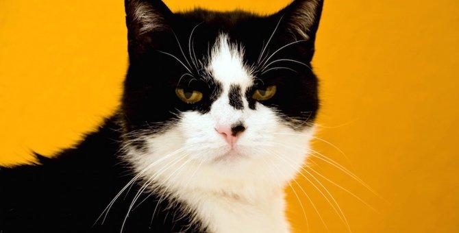 猫が鼻くそ柄になるのはなぜ?猫の柄について解説!