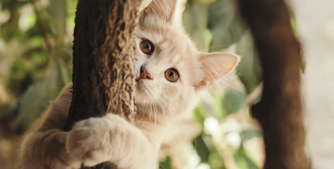 猫に鎖骨はある?柔らかい体になった秘密を大公開