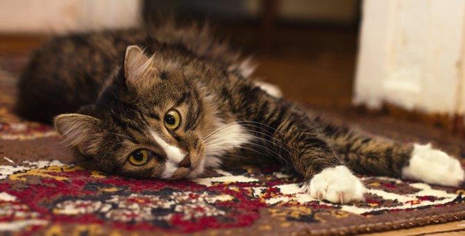 猫の夜鳴きの原因とその4つの対策