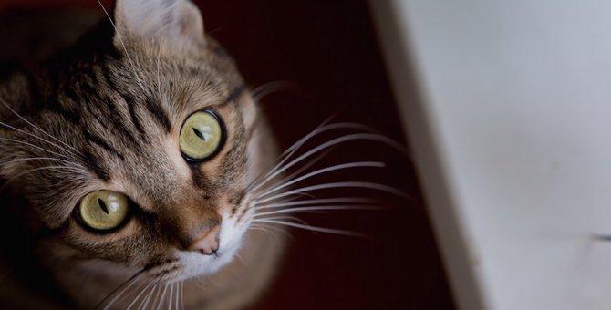 猫の気持ちは目線で分かる!9つの気持ち