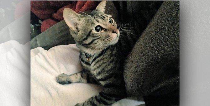 怪しげな店で出会った2ヵ月の仔猫は運命のボス猫「レオ」