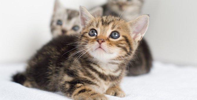 子猫の飼い方とは?迎える為の準備やお世話のポイント!