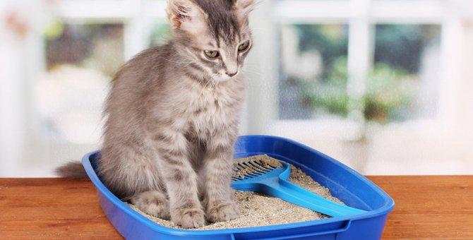 猫の膀胱炎に効く薬 その種類と値段、投与期間について