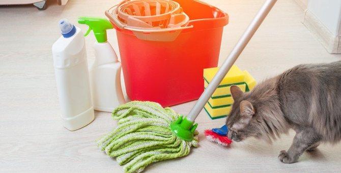 猫がいるお部屋の『消臭対策』3選!気になる臭いの原因と場所別にすべき工夫とは?