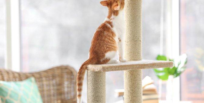 猫を飼ったら『キャットタワー』があるといい5つの理由