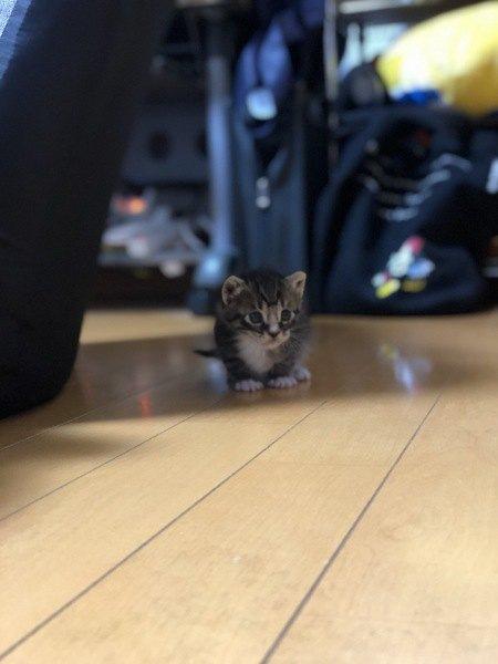猫が飼い主を探しまわる5つの理由