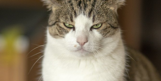 猫が飼い主に文句を言いたい時の仕草3つ