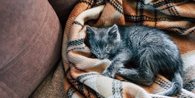 猫が寝るとき白目でも大丈夫?『第三眼瞼』の驚くべき役割4つ
