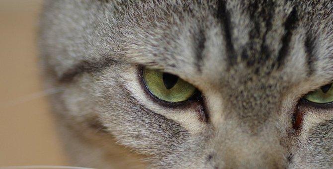 猫に『近づくと怒ってくる』ときの理由5つ