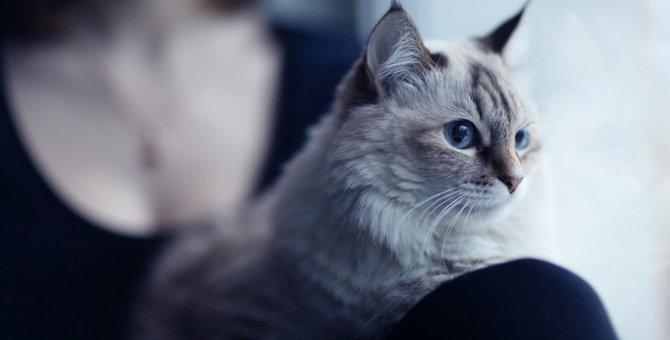 猫がやきもち焼いてる時の6つの行動