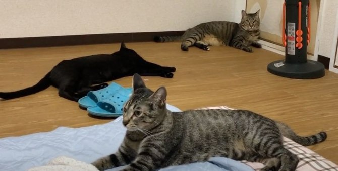 猫ちゃん達と過ごすのんびりした1日♡