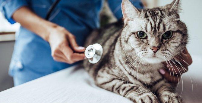 猫が『誤食・誤飲』した時の危険なタブー行為5つ