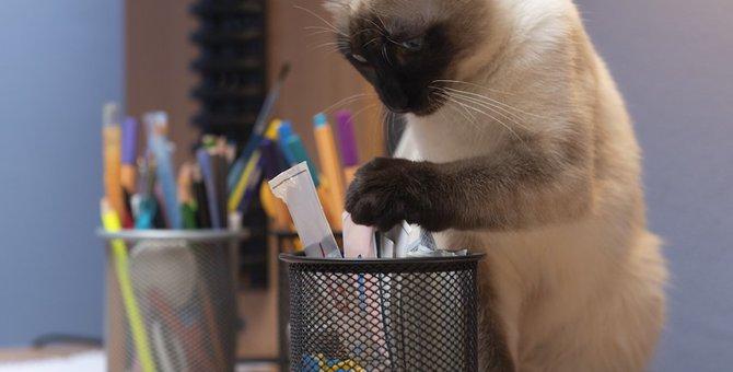 猫のかわいいペンケースおすすめ12選